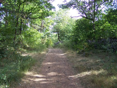 Beau chemin en sous bois